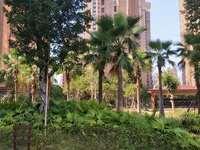 滨海实验小学旁 55平高层 单身公寓 新装修未入住 现仅售31万